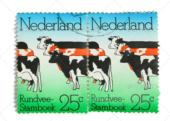 Dutch  cattle on postage stamps - Stock Photo - Images