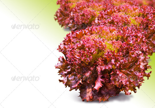Red Coral  - Stock Photo - Images
