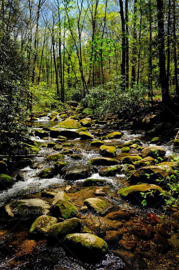 Smoky Mountain National Park - Stock Photo - Images