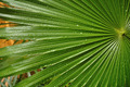 Tropical Palm Leaf with Raindrops - PhotoDune Item for Sale