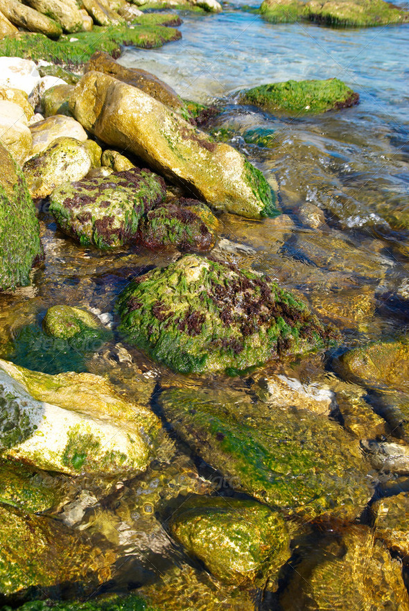 Coast with stones with green marine algae. - Stock Photo - Images