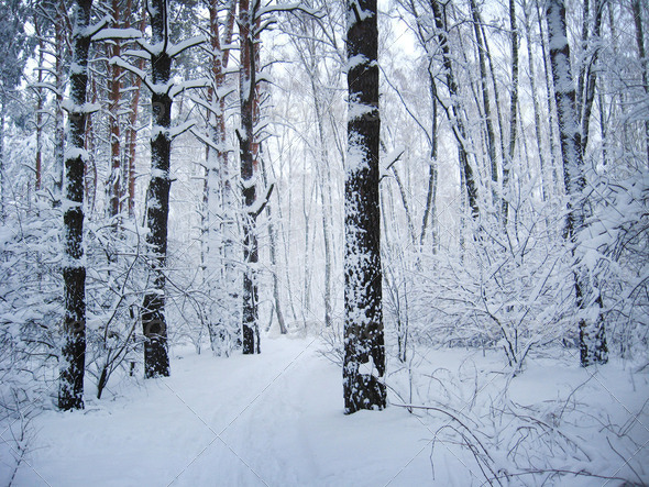Winter landscape in a forest - Stock Photo - Images