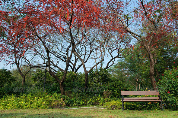 Park with red flower tree - Stock Photo - Images