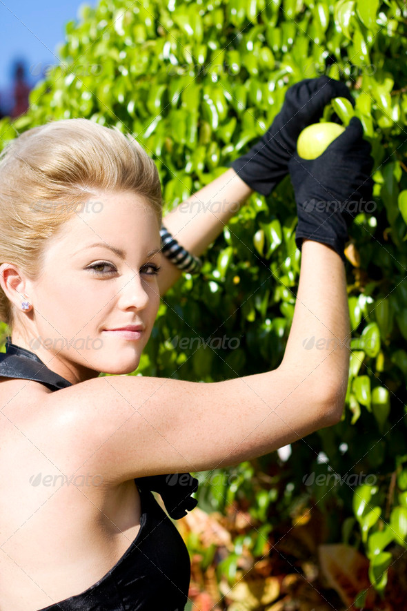 Woman Picking Fruit - Stock Photo - Images