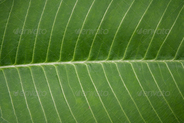 Abstract green leaf background - Stock Photo - Images