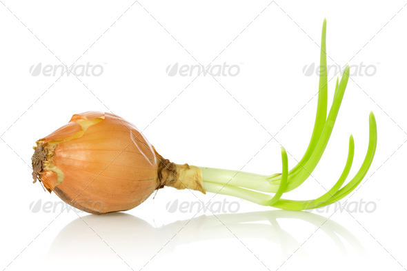 Old Onion Bulb With Sprouts - Stock Photo - Images