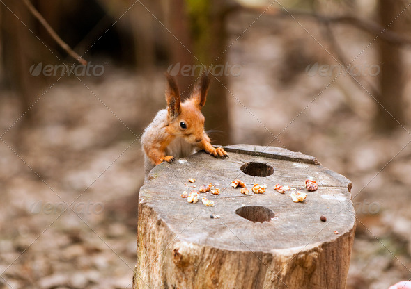 Little squirrel taking nuts from human hand in park - Stock Photo - Images