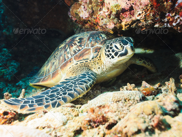 Sea turtle - Stock Photo - Images