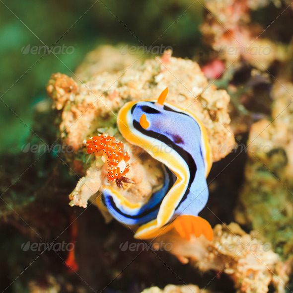Nudibranches - Stock Photo - Images
