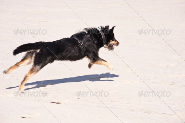 Young Dog - Stock Photo - Images