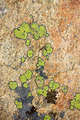 The lichens on the stone - PhotoDune Item for Sale