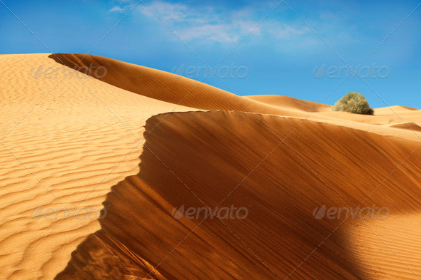 Desert landscape - Stock Photo - Images