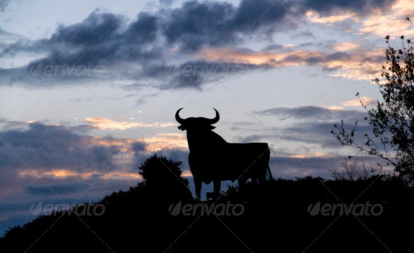 silhouette of a bull - Stock Photo - Images