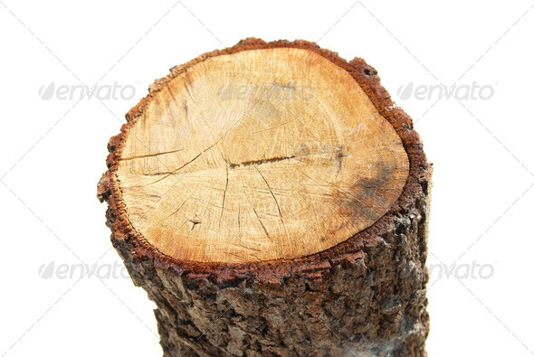 Wooden stump - Stock Photo - Images