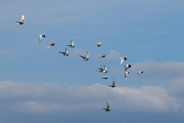 Birds - Stock Photo - Images