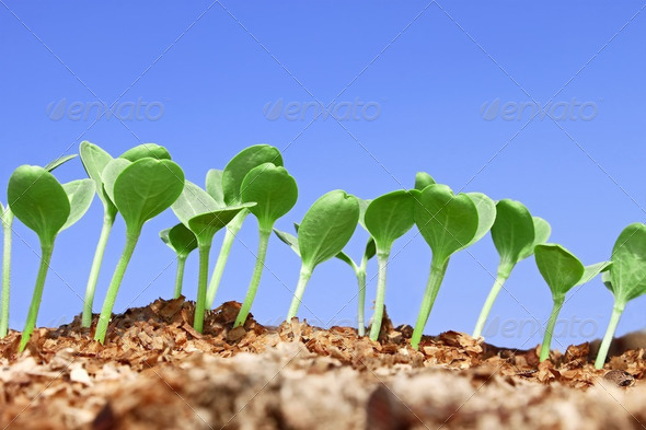 Small watermelon seedling against blue sky - Stock Photo - Images