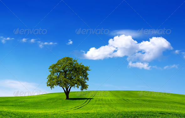 Eco landscape - Stock Photo - Images