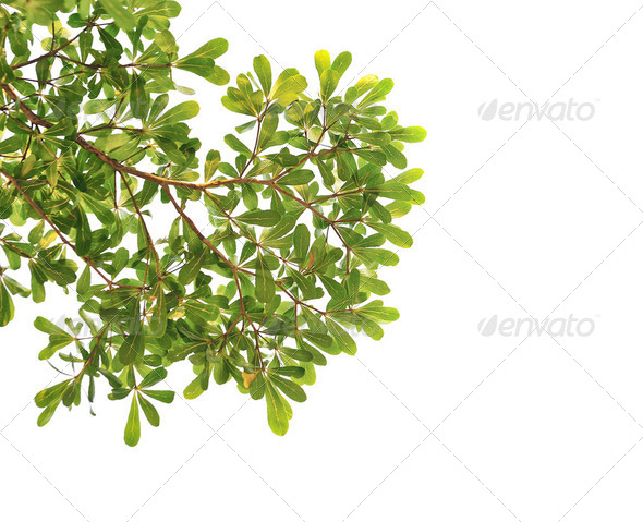 panoramic Green leaves  - Stock Photo - Images