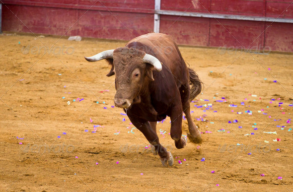 Brown bull attacking Spanish bullfighter - Stock Photo - Images