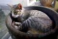 Cat Lying in Flower Pot - PhotoDune Item for Sale
