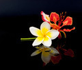Flowers on a Black Background - PhotoDune Item for Sale