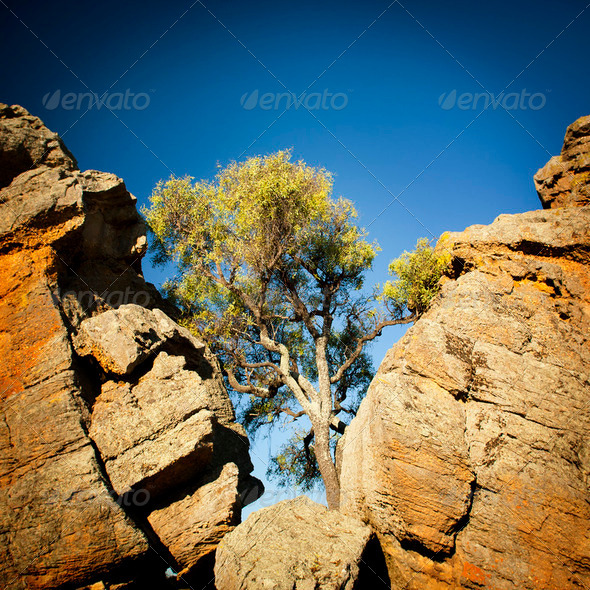 Outback Tree - Stock Photo - Images