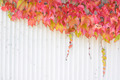 Autumn/fall foliage. - PhotoDune Item for Sale