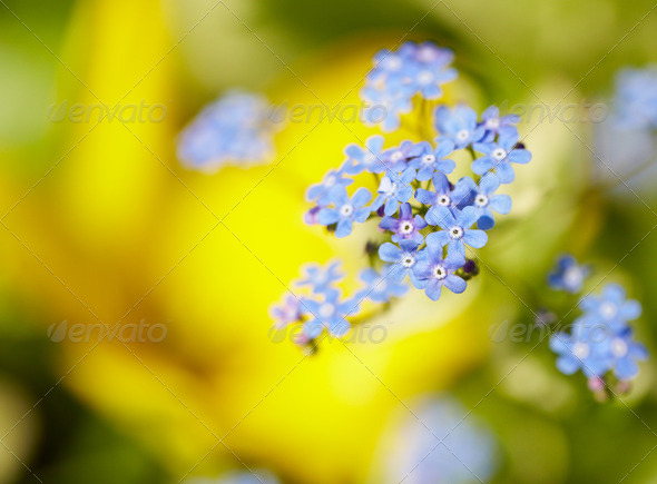 Blue flowers - Stock Photo - Images