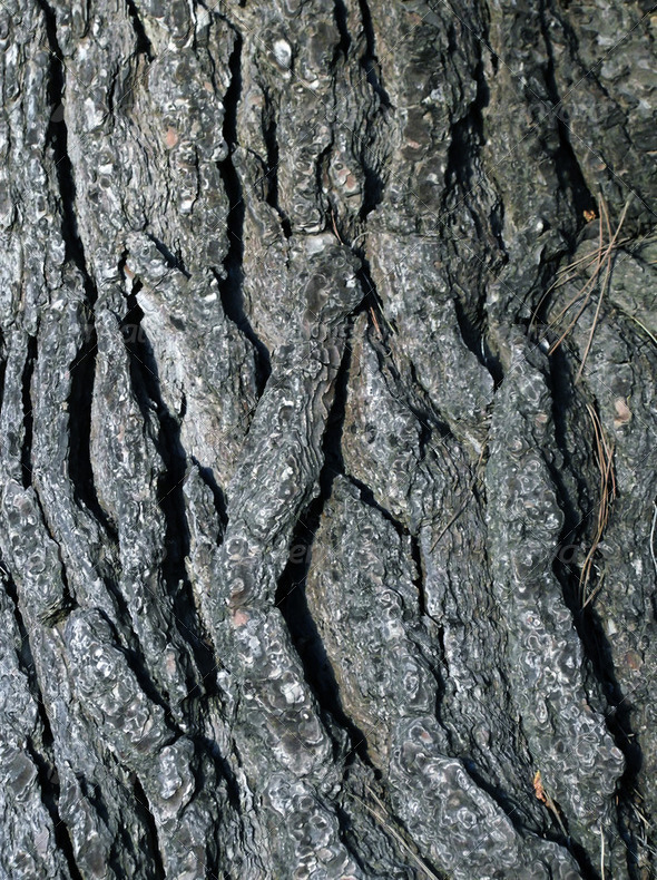 cracked tree trunk - Stock Photo - Images