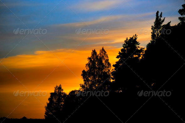 Trees on orange sky - Stock Photo - Images