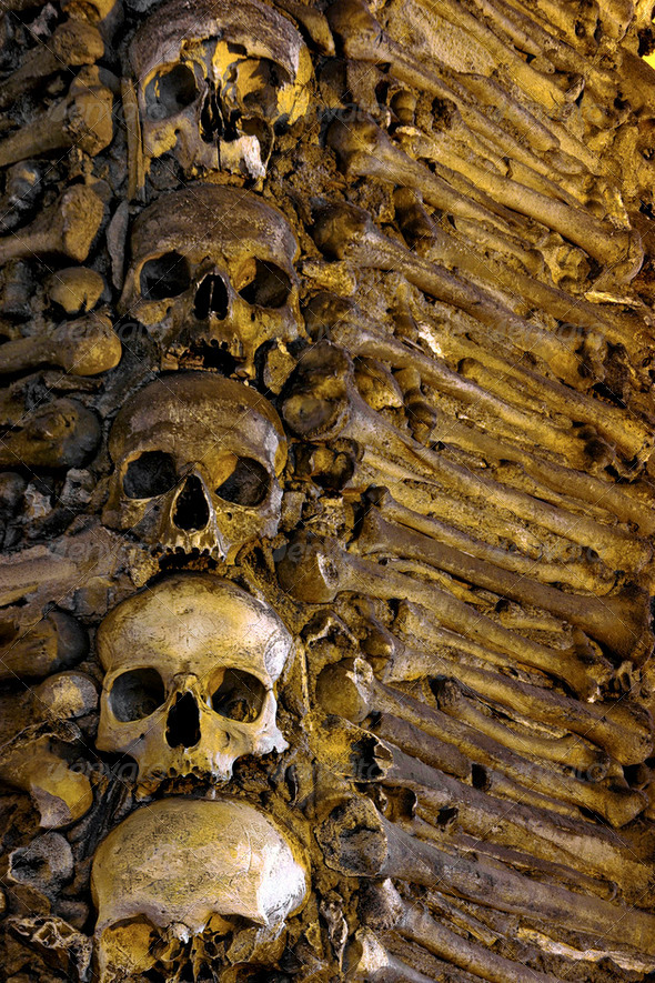 Bones and Skulls - Stock Photo - Images