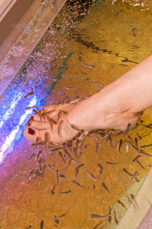 Fish spa pedicure - Stock Photo - Images
