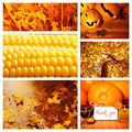 Autumn season collage - PhotoDune Item for Sale