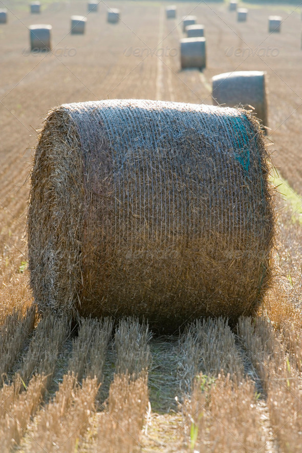 harvest  - Stock Photo - Images