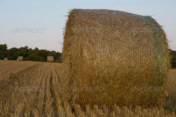 harvest 4 - Stock Photo - Images