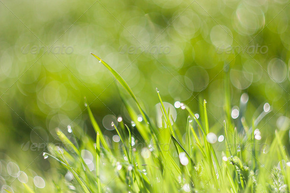 Morning Dew with Bokeh 4 - Stock Photo - Images
