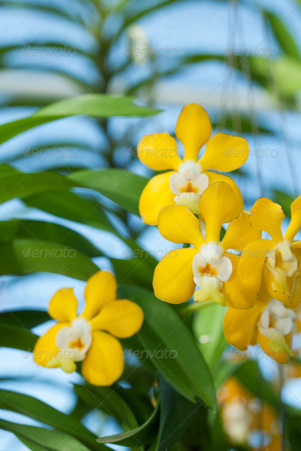 Close up of orchids - Stock Photo - Images