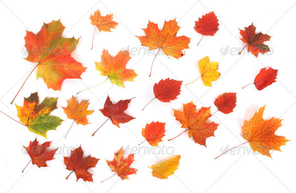 autumn background - Stock Photo - Images