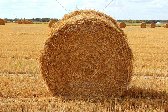 haystack - Stock Photo - Images
