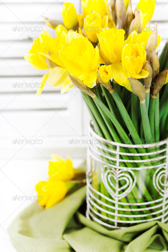 yellow daffodils - Stock Photo - Images