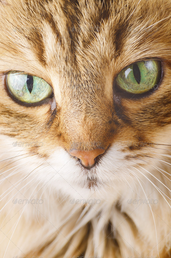 Cute cat - Stock Photo - Images