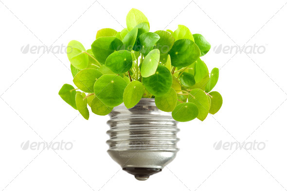 Green Plant Growing Out Of A Bulb - Stock Photo - Images