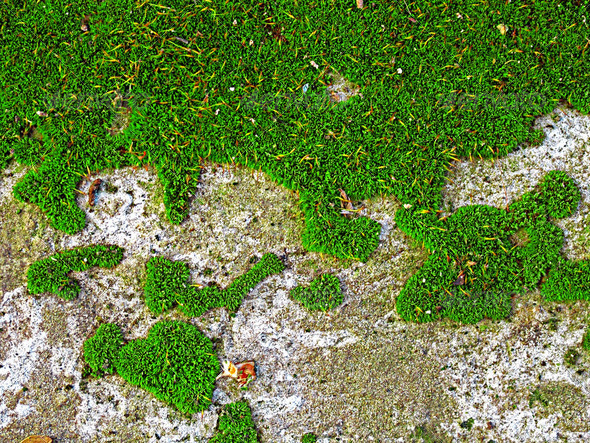 Moss Texture Close-up - Stock Photo - Images
