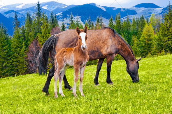 Young foal and mare eating grass on meadow at mountains landscap - Stock Photo - Images