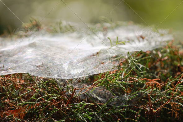 Plant with spider nets - Stock Photo - Images