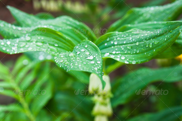 dew drops on the leaf - Stock Photo - Images