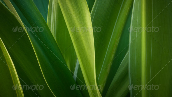 Abstract green leaf - Stock Photo - Images