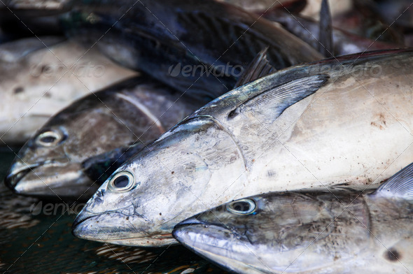 Fish at the fish market in Muscat, Oman  - Stock Photo - Images