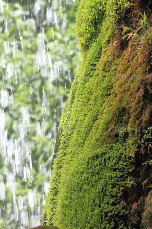 Green moss growing on the rocks against  waterfall - Stock Photo - Images