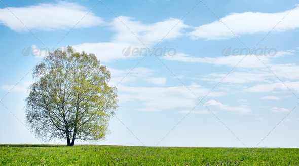 Summer landscape with lonely tree against blue cloudy sky - Stock Photo - Images